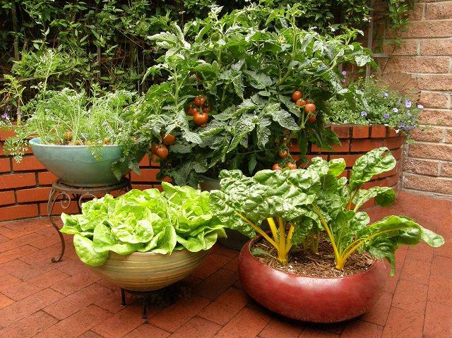 kitchen garden ideas in Kenya Archives , Oxfarm