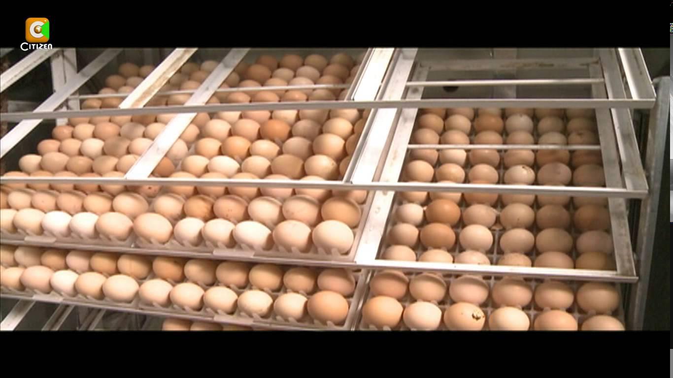Poultry farming Archives - Oxfarm