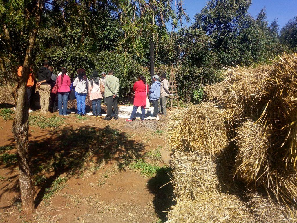 Farmers in Field trainning on Mushroom