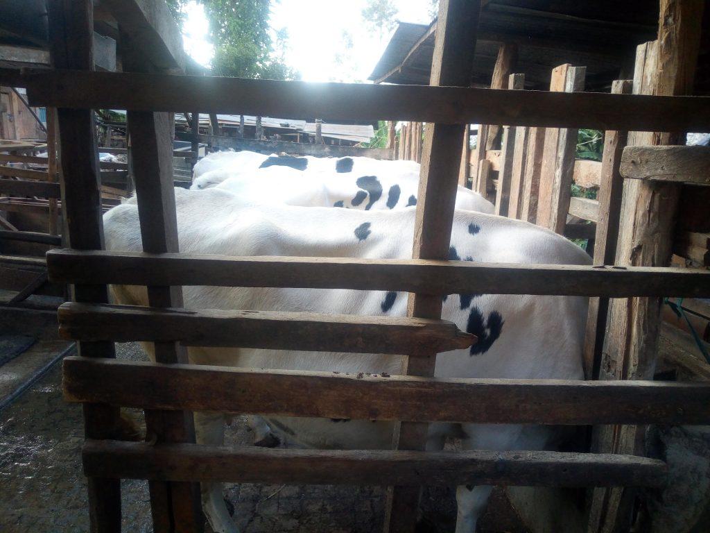 dairy farming kenya nyeri mukurweini
