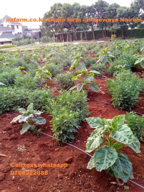 Agribusiness in Kenya