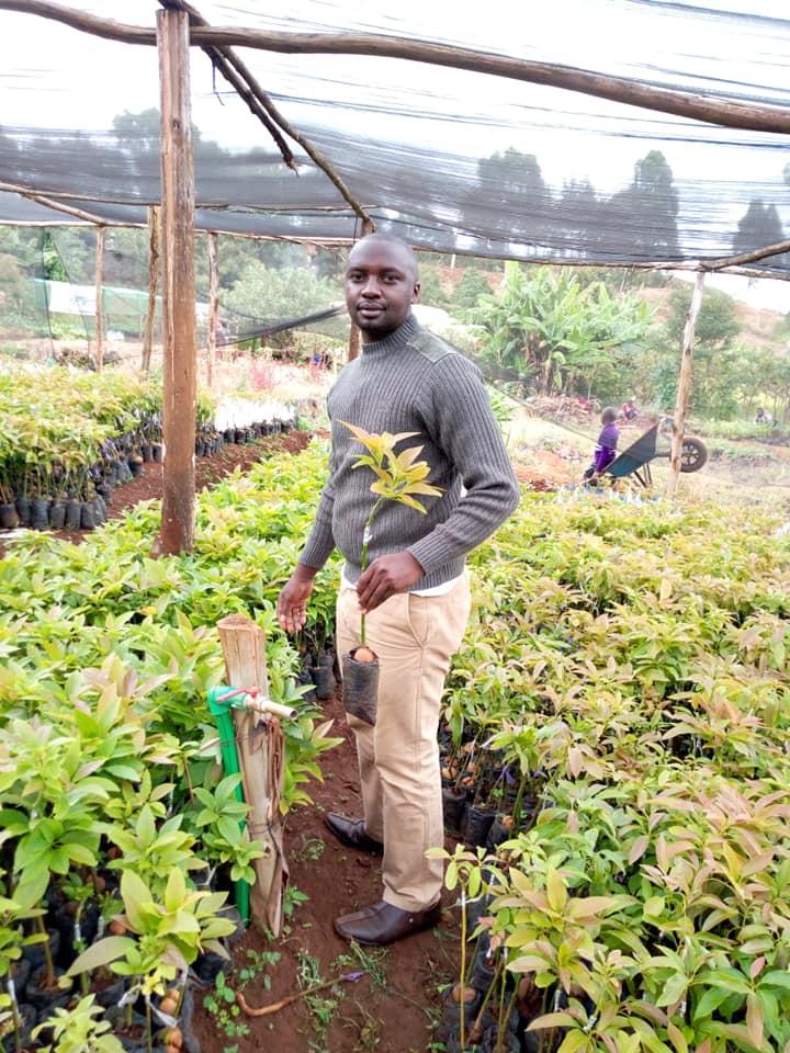 nursery mkulima wa nyeri farm
